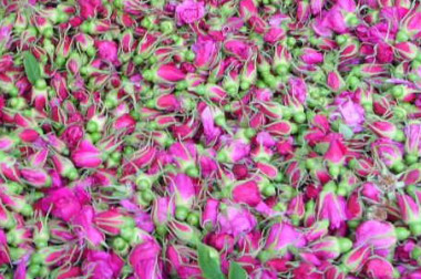 Rosebuds Tea — a Key to Beauty and Happiness